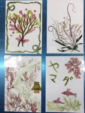 海藻おしば1.jpg