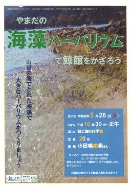 海藻ハ—バリウムで鯨館をかざろう.jpg