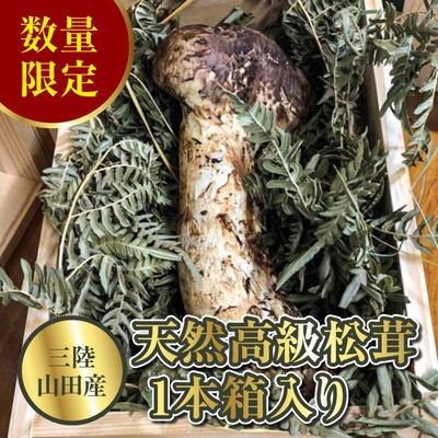 matutake_YD-153.jpg