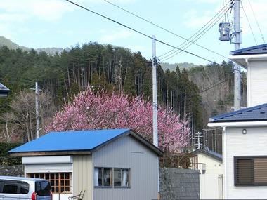 s-CIMG3246-2.jpg